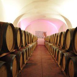 Veinid küpsemas