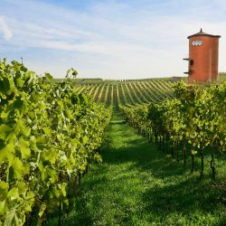 fontana_candida-winery-view-from-vineyard